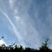 Actualización del Plan de Acción de Cambio Climático de Red Eléctrica en línea con el Acuerdo de París