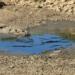 APPA advierte sobre el negativo impacto de la sequía en las centrales minihidráulicas