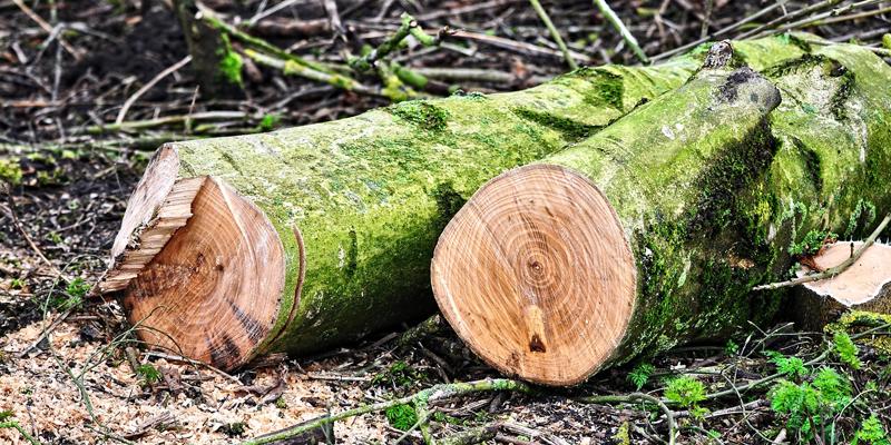 La actual limitación regulatoria al sector permite hasta 6.500 horas de actividad al año, frente a las 8.000 que reclama APPA Biomasa para incrementar la producción eléctrica un 23%.
