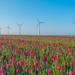 DSM opera con electricidad 100% renovable adquirida en los Países Bajos