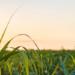 La bioenergía es la renovable que más crecerá hasta 2023, según la Agencia Internacional de Energía