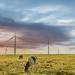 Acciona revalida su posición como primer operador verde en el New Energy Top 100 Green Utilities