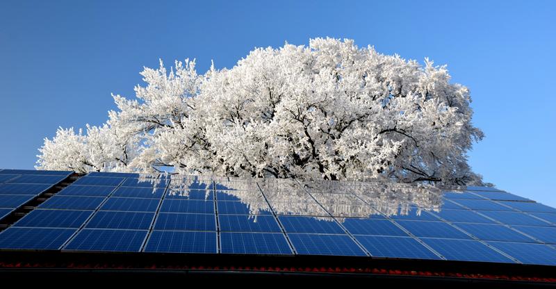 Paneles fototolvtaicos sobre cubierta de un edificio con un almendro en flor al fondo. Autoconsumo de energía.