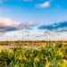 Andalucía simplifica los trámites administrativos para proyectos de energías renovables con el Plan de Acción 2018-2020