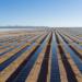 La primera Carta de Crédito Verde en Europa se destina al suministro de paneles a una planta solar en México