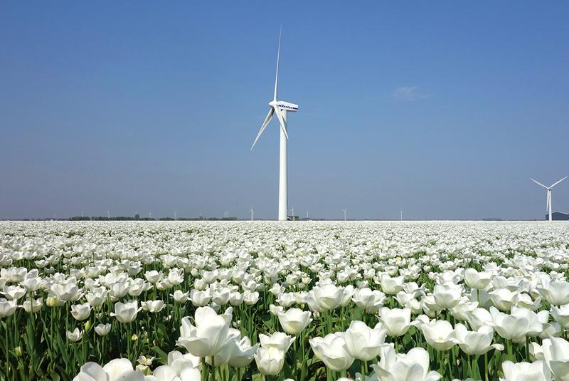 Una turbina eólica con tulipanes alrededor.