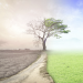 Declarada la emergencia climática y ambiental por el Parlamento Europeo