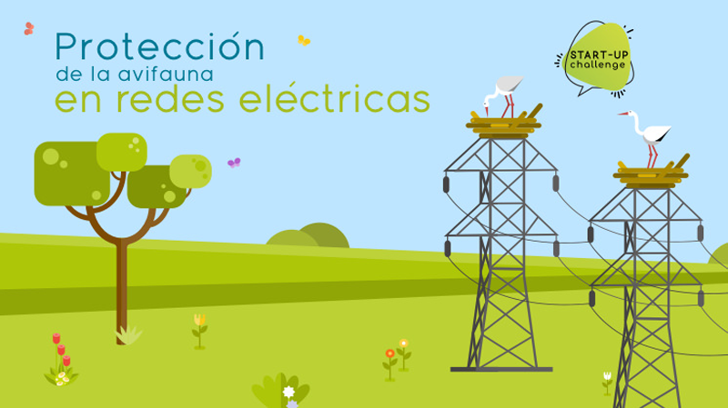 Protección de la avifauna en redes eléctricas
