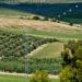 Casi el 20% del consumo total de energía en Andalucía en 2019 fue de origen renovable