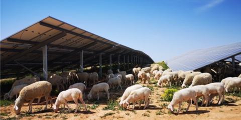 Entra en funcionamiento una planta fotovoltaica de 50 MW en el municipio turolense de Azaila